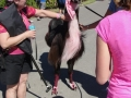Even The Llamas Were Pink!