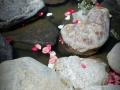 Petals in the water
